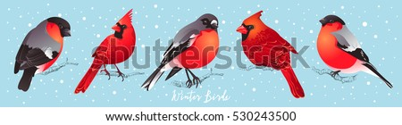 set of winter birds cardinal