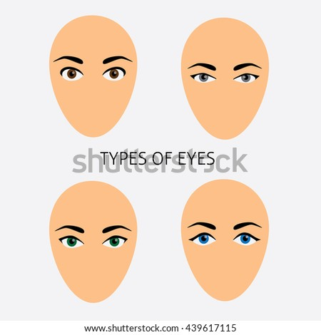 set of woman eyes types vector
