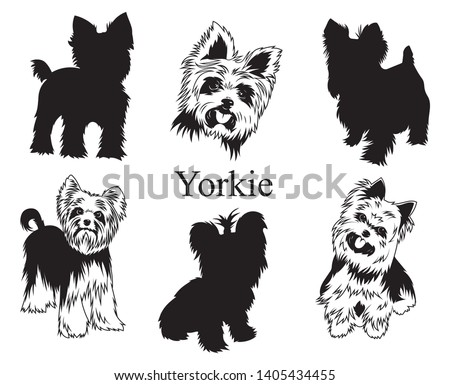 Set of yorkies. Collection of pedigree dogs. Black white illustration of a york dog. Vector drawing of a pet. Tattoo.