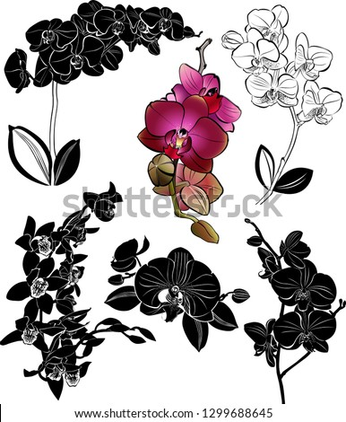 set orchids flowers it is isolated
