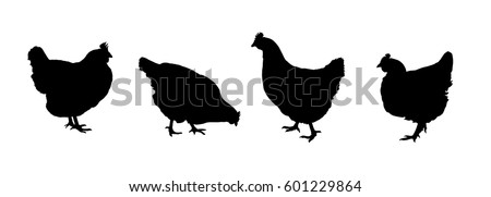 Set realistic black silhouettes standing, walking and pecking hens isolated on white background - vector