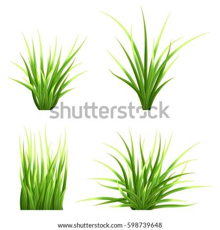 set realistic vector  grass