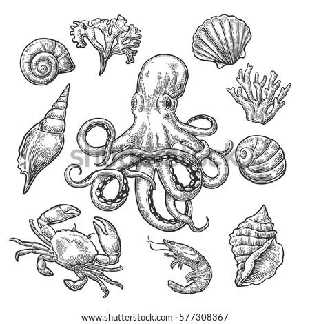 set sea shell  coral  crab ...