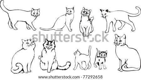 set vector cats animal drawing