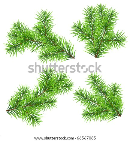 Set vector Christmas tree branch for decorate . Easy to make your own one. #66567085