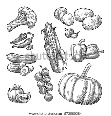 Set vegetables. Cucumbers, Garlic, Corn, Pepper, Broccoli, Potato and Tomato. Isolated on the white background. Vector black hand drawn vintage engraving illustration for poster, label and menu.