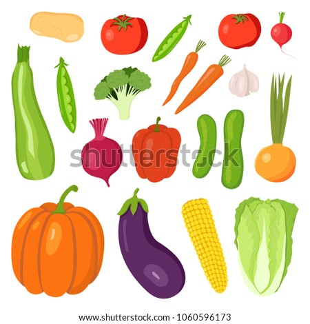 Set vegetables: potatoes, carrots, onions, garlic, radish, beets, eggplant, zucchini, pumpkin, cucumber, tomato, corn, cabbage, broccoli, pepper, peas. Hand drawing of flat. Vector illustration.