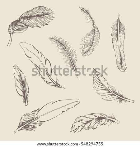 set vintage feather on beige...