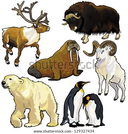 set with arctic animals
