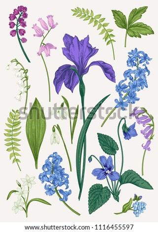 Set with blue spring and summer flowers. Botanical vector illustration. Vintage. Colorful.