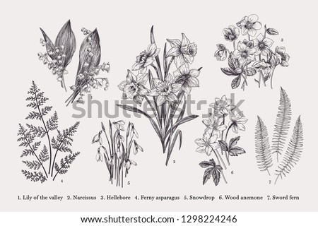 Set with early spring flowers. Vector botanical illustration. Black and white.