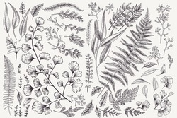 Set with leaves. Botanical illustration. Fern, eucalyptus, boxwood. Vintage floral background. Vector design elements. Isolated. Black and white.