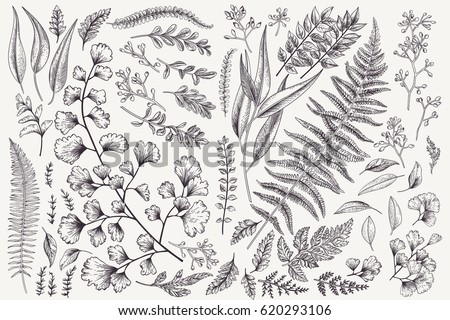 Set with leaves. Botanical illustration. Fern, eucalyptus, boxwood. Vintage floral background. Vector design elements. Isolated. Black and white. - Shutterstock ID 620293106
