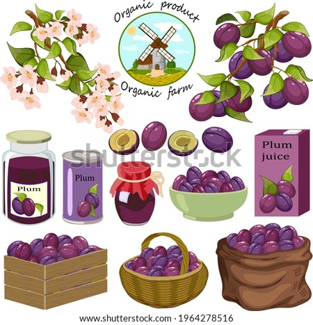 Set with plums and products from them.Branches with plums, plum products on a white background in vector illustration.