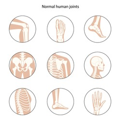 Set with spine, knee, skull and other human joints icon. Normal bones anatomy. Skeletal x ray medical poster. Orthopedic or chiropractic treatment concept. Anatomical logo flat vector illustration.