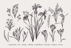 Set with spring flowers. Botanical illustration. Black and white.