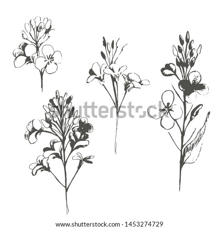 Set with summer flowers, canola. Hand draws field plants in ink, Oliy canola. botanical illustration vintage. Sprig with leaves, buds, flowers. Design for wrapping, wallpaper, textiles. #1453274729