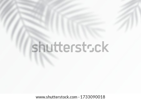 shadow effects with tropical