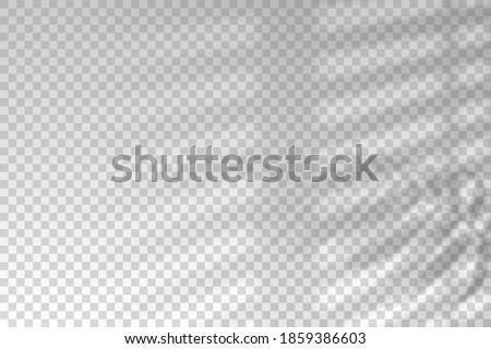 shadow of window blinds shade