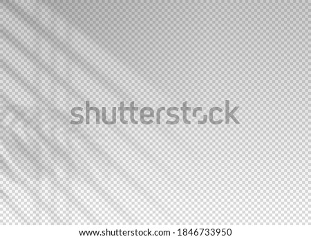 Shadow of window blinds. Shade on transparent background. Overlay effect plant leaf. Reflection shadow blinds. Light from window on wall office. Realistic soft shade blind. Horizontal mockup. Vector
