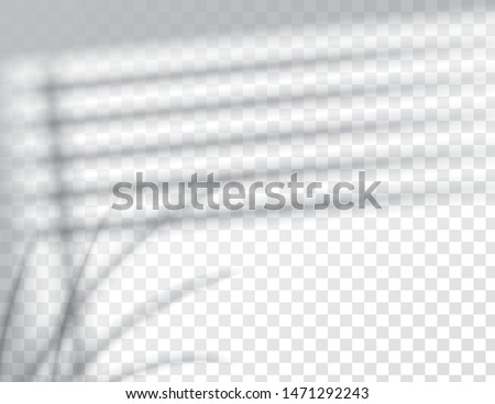 Shadows, overlay effects mock up, window jalousie shadow frame and leaf of plants, natural interior light, vector illustration