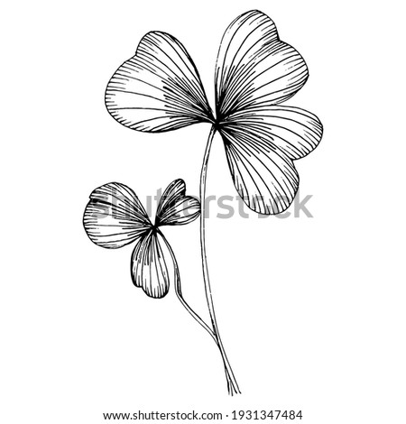 Shamrock clover. Floral botanical flower. Isolated illustration element. Vector hand drawing wildflower for background, texture, wrapper pattern, frame or border. Patricks day background. Photo stock ©