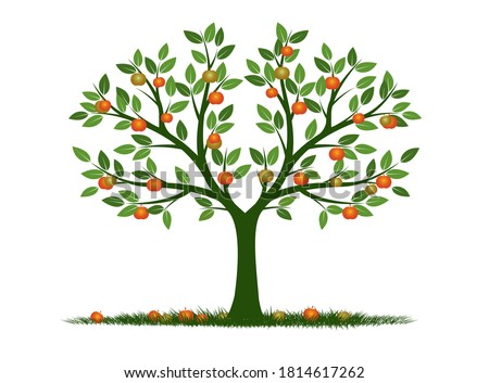 shape of tree with leaves and