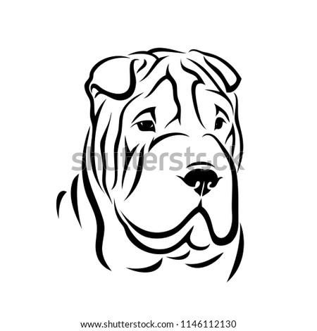 Shar Pei dog - isolated vector illustration