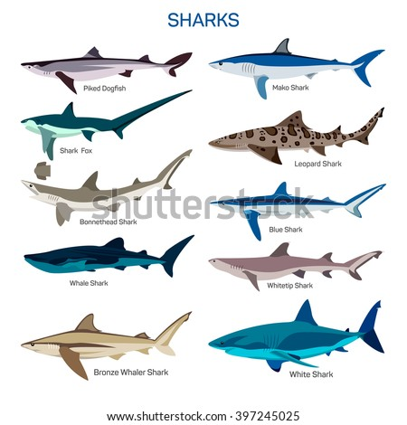 shark fish vector set in flat