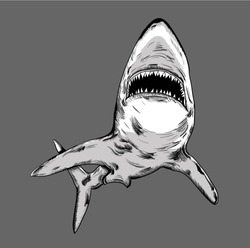 shark in the sea. vector illustration