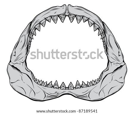 shark jaw isolated on white
