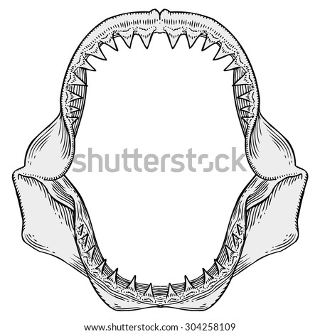 shark jaws illustration