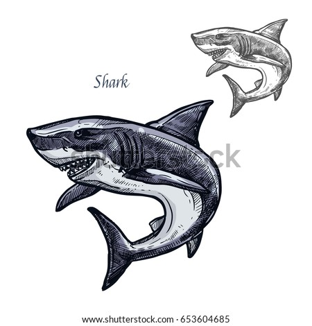 Shark sketch vector fish icon. Isolated ocean predatory white shark fish species. Isolated fauna and zoology symbol or emblem for fishing club or fishery market