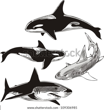 Sharks and killer whales. Set of black and white vector illustrations.