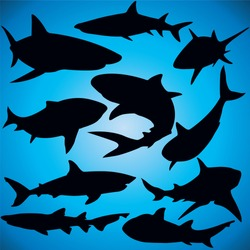 Sharks silhouette - Vector