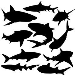 Sharks silhouette vector illustration.