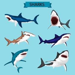 Sharks vector image design set for illustrations, prints, logo, decoration and other creative and design needs.