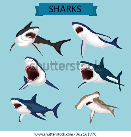 sharks vector image design set