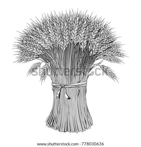 Sheaf of wheat enagraving, black and white vector illustration