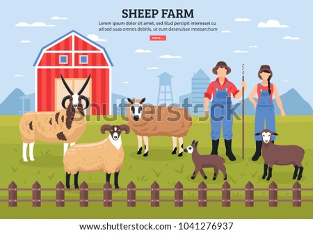 sheep breeding husbandry with