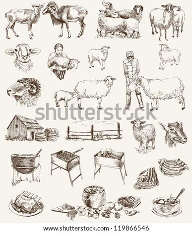 sheep breeding. set of vector...