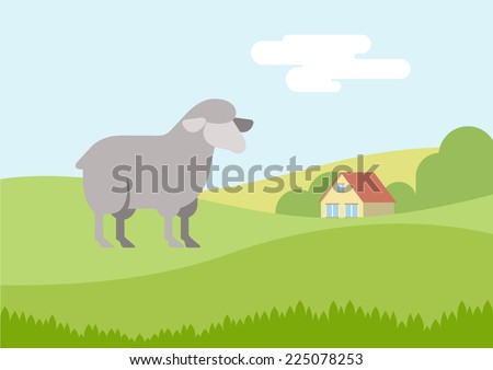 sheep on farm grass field flat