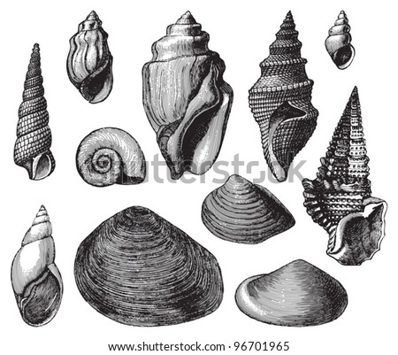 shell fossils  tertiary period