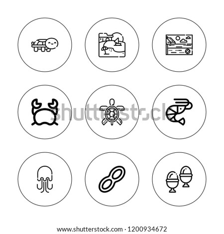 shell icon set collection of 9