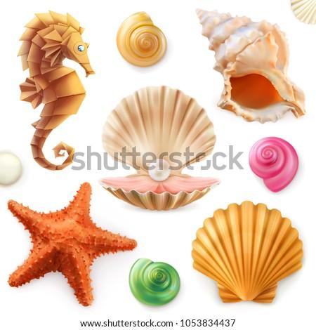 shell  snail  mollusk  starfish
