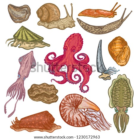 Shellfish vector marine animal octopus molluscs animalistic character octopi with tentacle oyster snail in sea illustration set of seafood cuttlefish devilfish isolated on white background Stockfoto ©