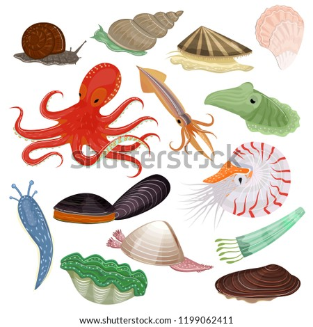 Shellfish vector marine animal octopus molluscs tentacle and animalistic character octopi oyster snail in sea illustration set of seafood cuttlefish and devilfish isolated on white background Foto stock ©
