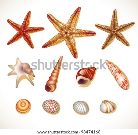 Shells set isolated- vector illustration