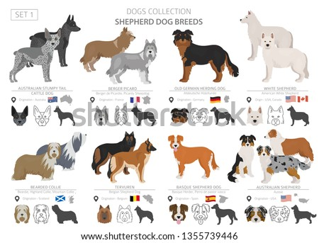 Shepherd and herding dogs collection isolated on white. Flat style. Different color and country of origin. Vector illustration Foto stock ©