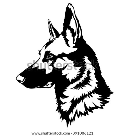 shepherd dog portrait